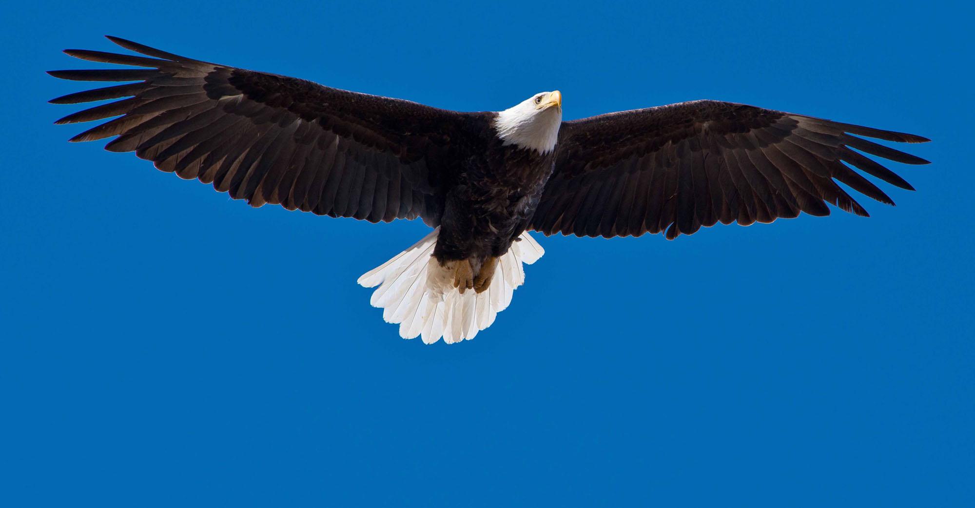 Eagle-Flight_w2000